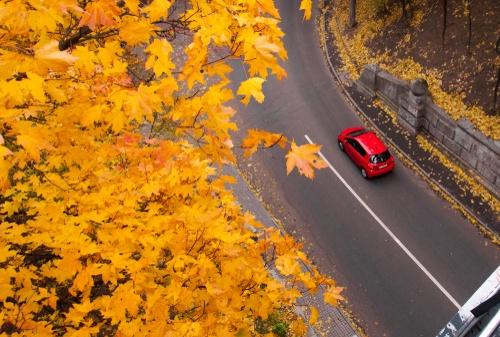 6 ieteikumi, kurus jāievēro gan autovadītājiem, gan gājējiem rudenī