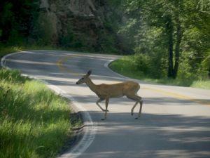 dzīvnieki uz ceļa